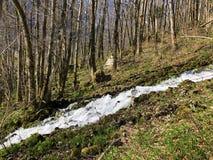 Fonte de fluxo Tschuder com cachoeira e mola do c?rsico ou Karstquelle Tschuder da fonte de ?gua, Schwende fotos de stock