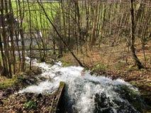 Fonte de fluxo Tschuder com cachoeira e mola do c?rsico ou Karstquelle Tschuder da fonte de ?gua, Schwende imagem de stock