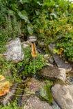 Fonte de madeira na montanha Kackarlar em Turquia, Rize Imagem de Stock Royalty Free