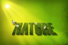 Fonte de nature photos stock
