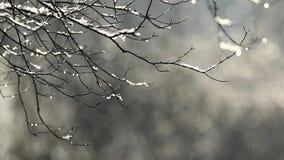 Fonte de neige banque de vidéos