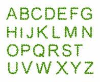 Fonte delle foglie verdi, giorno di St Patrick, fonte del trifoglio, Fotografie Stock Libere da Diritti