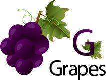 Fonte di g dell'illustratore con l'uva Immagine Stock