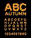 Fonte do outono Folhas do amarelo do alfabeto ABC outonal Foto de Stock