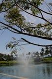 Fonte e árvore de água fotos de stock