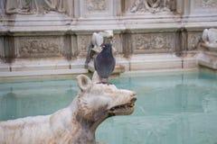 Fonte Gaia or fountain of joy, Piazza del Campo, Siena, Tuscany, Italy royalty free stock photo
