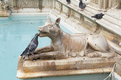 Fonte Gaia Royalty Free Stock Photography