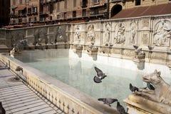 Fonte Gaia in Siena Stockfoto