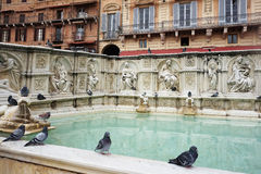 Fonte Gaia, Siena Royalty Free Stock Photos