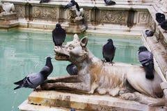Fonte Gaia, Siena Royalty Free Stock Photos