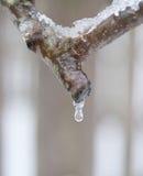 Fonte glaciale de branche Images libres de droits