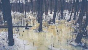 Fonte tôt de forêt de ressort photographie stock libre de droits