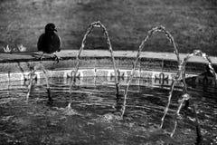Fonte telhada com os pombos no parque municipal de elche foto de stock