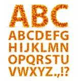 Fonte tipografica dei fogli di autunno Fotografia Stock