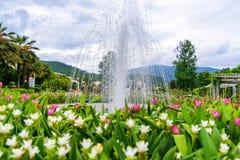 Fontein in de Siam-Tulp bloemtuin in Chiang Mai, Rajapruk Stock Fotografie