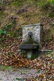 Fontein in het hout Stock Afbeeldingen