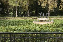 Fonteinbloemen door de zomer worden geïnspireerd die stock afbeeldingen