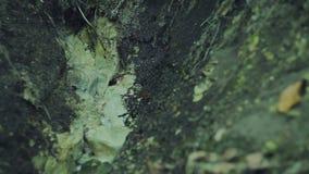 Fontes da floresta de agua potável filme