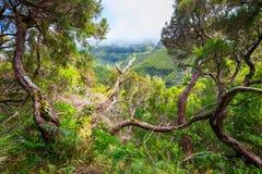 Fontes Lorbeerwald-Lewada DAS 25 und Lewada tun Risco, Madeira Stockbild