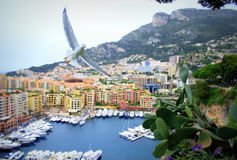 Fontvielle view,Monaco principality Royalty Free Stock Image