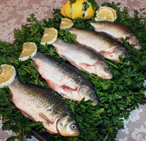 Food. Food,fresh fish,Northern Caucasus,Russia Royalty Free Stock Photography