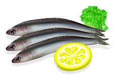 Food anchovy Royalty Free Stock Images