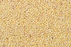 Food background:Eastphoto, tukuchina, Sorghum rice. Still Life on White Background Royalty Free Stock Image