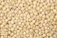 Sorghum rice Stock Photos