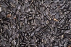 Food background from black seeds of sunflower Royalty Free Stock Photography