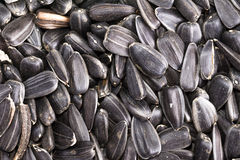 Food background from black seeds of sunflower Stock Photography