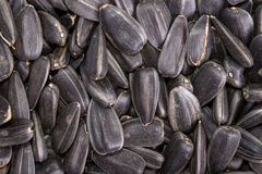 Food background from black seeds of sunflower Royalty Free Stock Photo