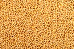 Food background of yellow mustard seeds, top view. Food background of dried yellow mustard seeds, top view stock photos