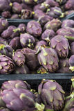 Food background. Green and purple Italian Artichokes Stock Photos