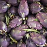Food background. Green and purple Italian Artichokes Stock Photography