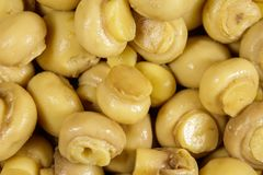 Food background of marinated mushrooms. Pickled champignons close-up stock photography