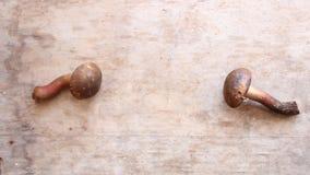 Food background, mushrooms stock footage