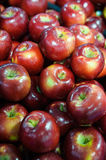 Food background - shiny and sweet red apple. Large group of ripe red apples background at the Farmer`s market. The most popular fruit, for its delicious taste Stock Image