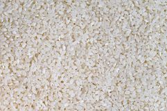 Short grains of uncooked white italica rice. Food background - short grains of uncooked white italica rice Stock Image