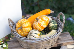 Food basket concept. Colorful halloween pumpkins in a wooden wicker. Autumn farmers harvest, thanksgiving day conceptual Royalty Free Stock Image