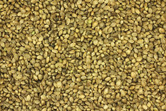 Food for the birds of grains of hemp  background Stock Images