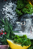 Food border background, sea fish Stock Images