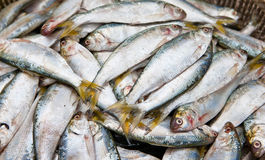 Food categories: sea fish Stock Photo