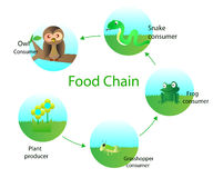 Food chain. Cartoon vector design Royalty Free Stock Images