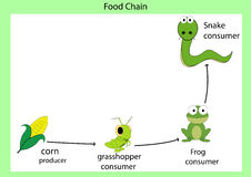 Food chain Stock Images