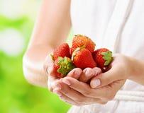 Fresh ripe red juicy strawberries Stock Image