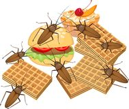 Food and cockroach Royalty Free Stock Photo
