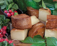 Food cousine composition of production of typical Italian cheese. Typical Tuscan cheese with lettuce and radishes stock images
