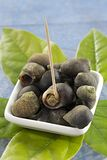 Food Crustaceans- Periwinkles - Rich in Magnesium Stock Images