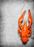 The food delicacies. Fresh boiled lobster. Stock Photo