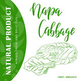 Food design with vegetable. Hand drawn sketch of napa cabbage. Organic fresh product for card or poster for cafe, market Stock Image